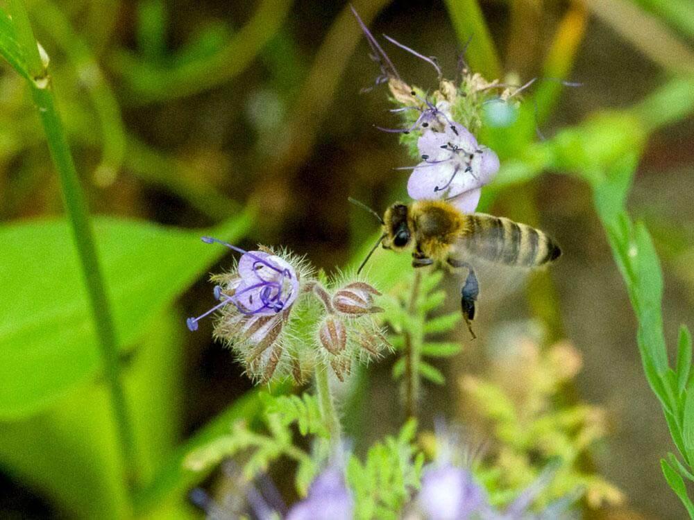 Mélange de fleurs – Prairie fleurie